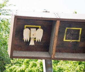 Königsvogel im Fangkasten des Hochstands - schon ohne das Pfand des Kopfes